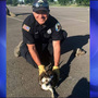 Eagle Fire Department saves mother and baby osprey