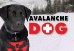 AVALANCHE DOG 986X555.jpg