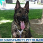 Kansas-bound dog mistakenly flown from Oregon to Japan