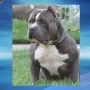 Woman accused of leaving Pitbull to freeze and starve to death in shed