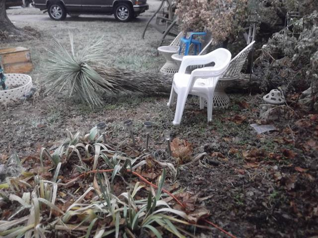 I lost my yucca tree how rude ice storm!!!
