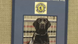 Comfort dog brings peace to Sangamon County court victims