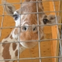 Animal park benefits from increased giraffe birth web views: Initially flagged as sexual