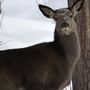 Deer harvests down in Jefferson County during weeklong gun season