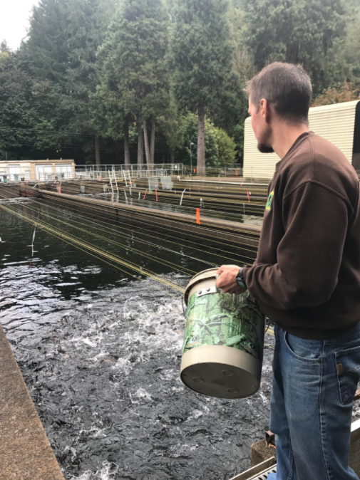 1 million Coho Salmon were moved to the Leaburg Hatchery in wake of the Eagle Creek Fire.