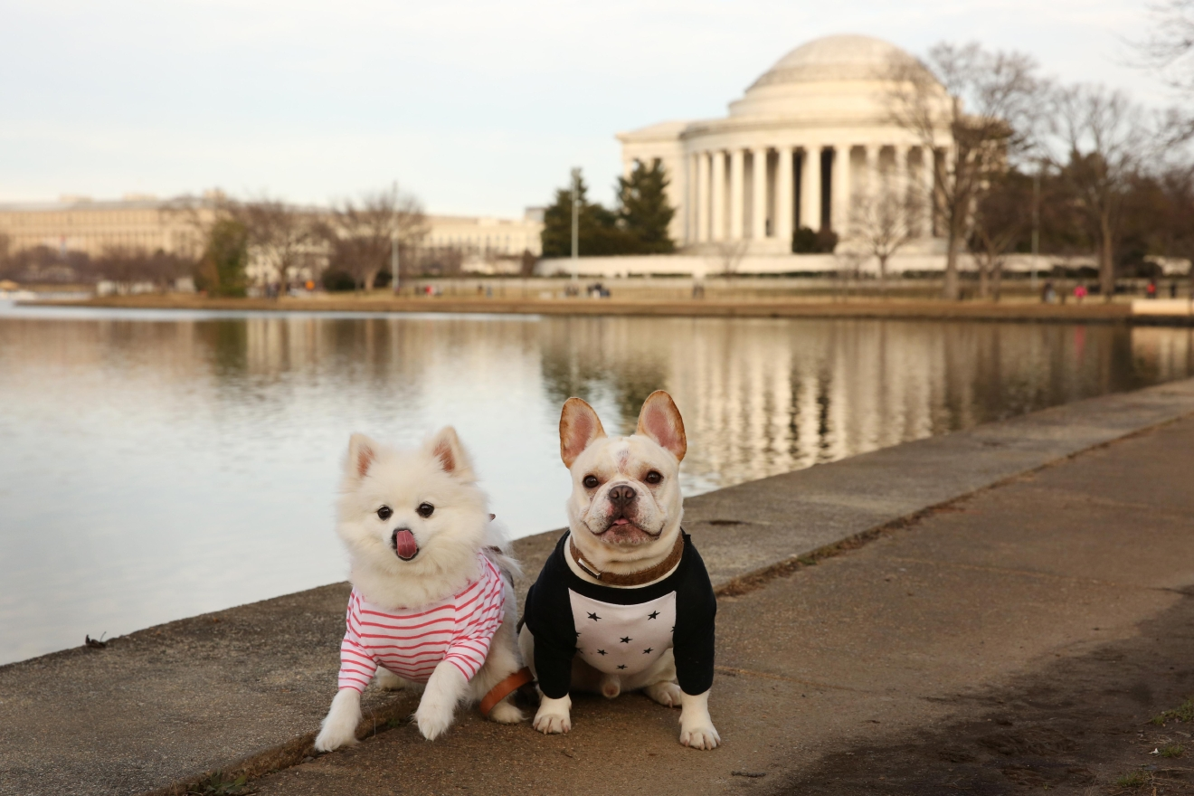 "Meet Sebastian and Luna, a  two and three-year-old French Bulldog and Pomeranian (respectively) ""dog couple"" who have lived in the DMV since 2014. Sebastian is from Ohio while Luna hails from Arizona. Luna came to live with mom a month before Sebastian, and she was not too excited to share her attention when he came along, but now they are best friends! Oh, and did we mention they are Instagram stars?? Like, actual stars with almost 50k followers! Their stardom led to an invite to walk with the models in a show at NY Fashion Week, and they helped raise $3,000 for the Humane Rescue Alliance through their participation in Fashion for Paws, which they will participate in again this year. If you or someone you know has a pet you'd like featured, email us at dcrefined@gmail.com or tag #DCRUFFined and your furbaby could be the next spotlighted! (Image: Amanda Andrade-Rhoades/ DC Refined)"