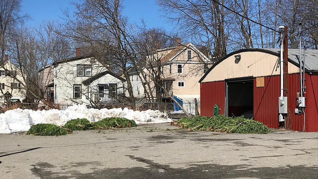 Marijuana plants are piled outside of a garage Tuesday morning on Bridge Street in Lewiston. DEA agents are at the scene.