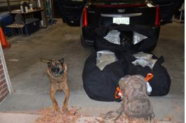 K9 Fletch with the marijuana deputies say he helped sniff out<p></p>