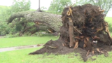 Trees collapse, knock out power, block roads