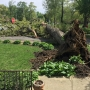 Washington Park Tree Comes Crashing Down