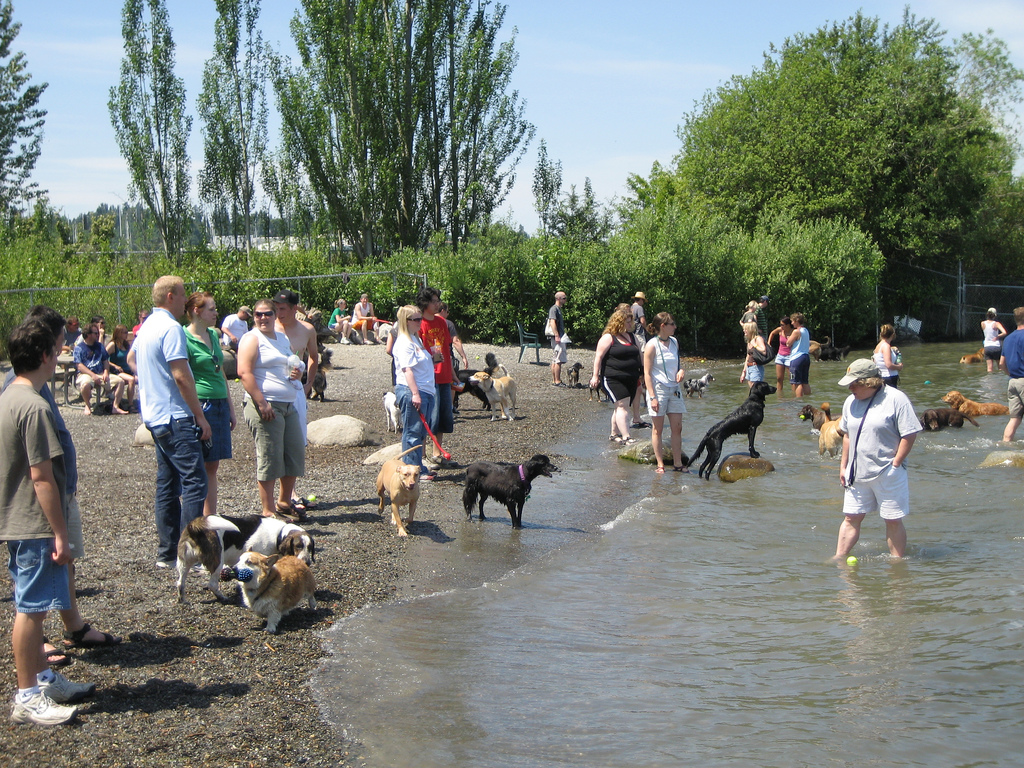 Home to Seattle's premiere dog beach, this humongous canine playground is an excellent spot for a spirited day out. (Image: https://flic.kr/p/NKAkP)