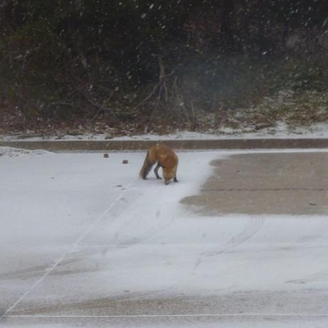 Sarah writes 'this cutie came out of the woods near my house. It seemed to be enjoying the weather!'