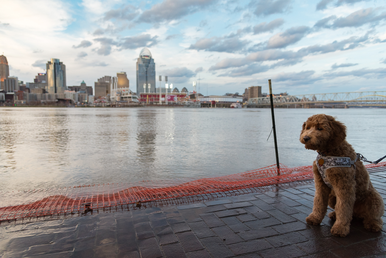 A 4-month-old puppy experiences her first flood in Covington. / Image: Phil Armstrong, Cincinnati Refined // Published: 2.21.18<p></p>