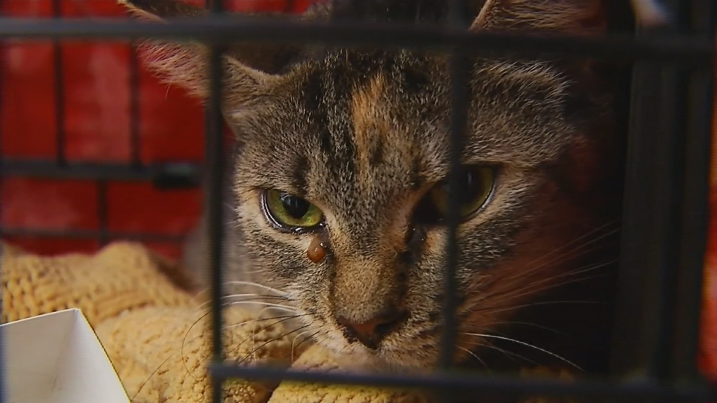Video only on 10 Cats living in squalor at abandoned Pawtucket