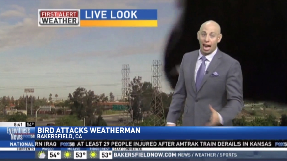 Weatherman confronted by bird on live eye during newscast | WWMT