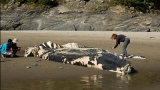 Photos: Dead baby whale washes ashore at Short Sand Beach