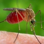 Health Department: West Nile Virus confirmed in Oklahoma County mosquito sample