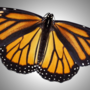 Workshop on monarch butterflies planned for teachers