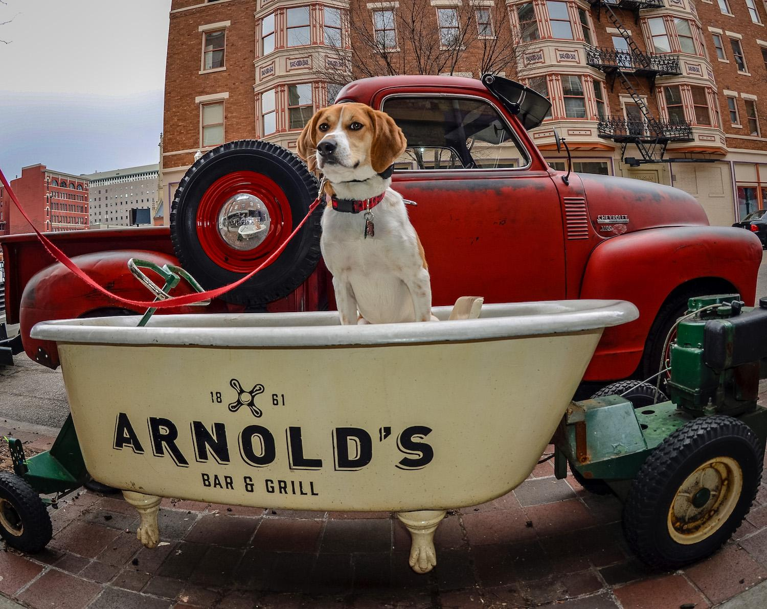 LOCATION: Arnold's bathtub / Mollie is a local Instagram celebrity. Famous for posing on fire hydrants in front of ArtWorks murals (and other Cincy landmarks), this hound dog has officially stolen our hearts. You can follow her adventures on Instagram @molliethehounddoggie / Image: Patti Mossey (Mollie's owner and #1 fan) // Published: 5.1.18