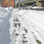City to look for feedback on snow removal at first-ever Snow Summit