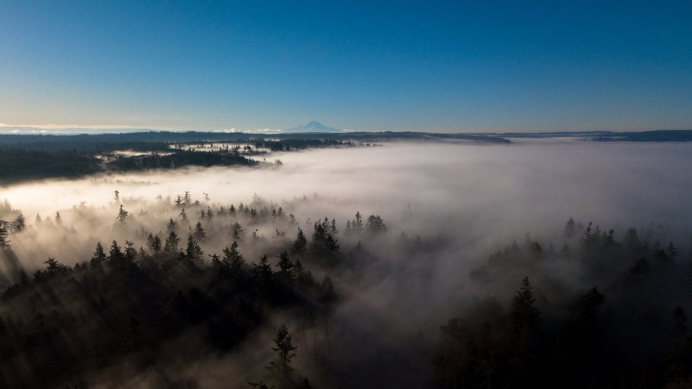 Drone video captures beauty of fog hugging Puget Sound shoreline