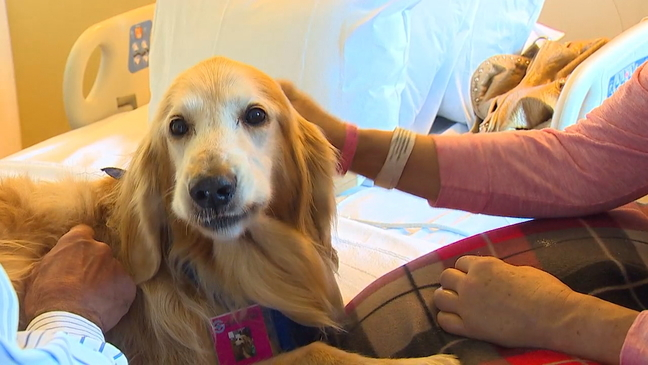Stroke survivor inspires others with help of therapy dog