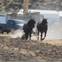 1st Annual Plowing Bee and Horse Spectacular comes to the Yakima Valley this weekend