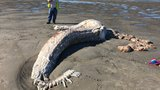 Mystery creature washes up on Maine beach