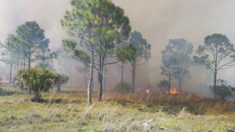 Hundreds Of Acres Up In Flames In Fellsmere Wildfire Wpec