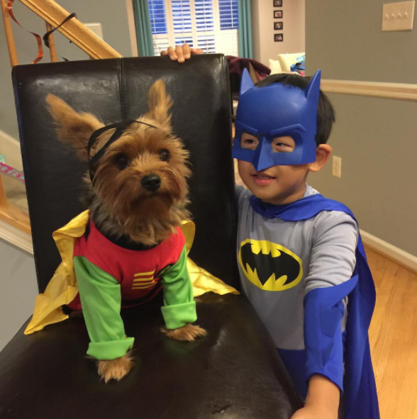 IMAGE: IG user @sammyk_the_yorkie / POST:{ }Happy Halloween from Batman & Robin!