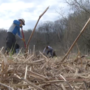 Columbia rotary clubs plant hundreds of trees ahead of Earth Day