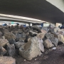 Campers return to I-205 underpass despite ODOT's efforts