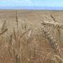 Washington Assoc. of Wheat Growers battles funding cuts of two agriculture programs
