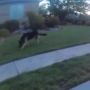 Police video shows St. George police officers tazing dog after alleged attack