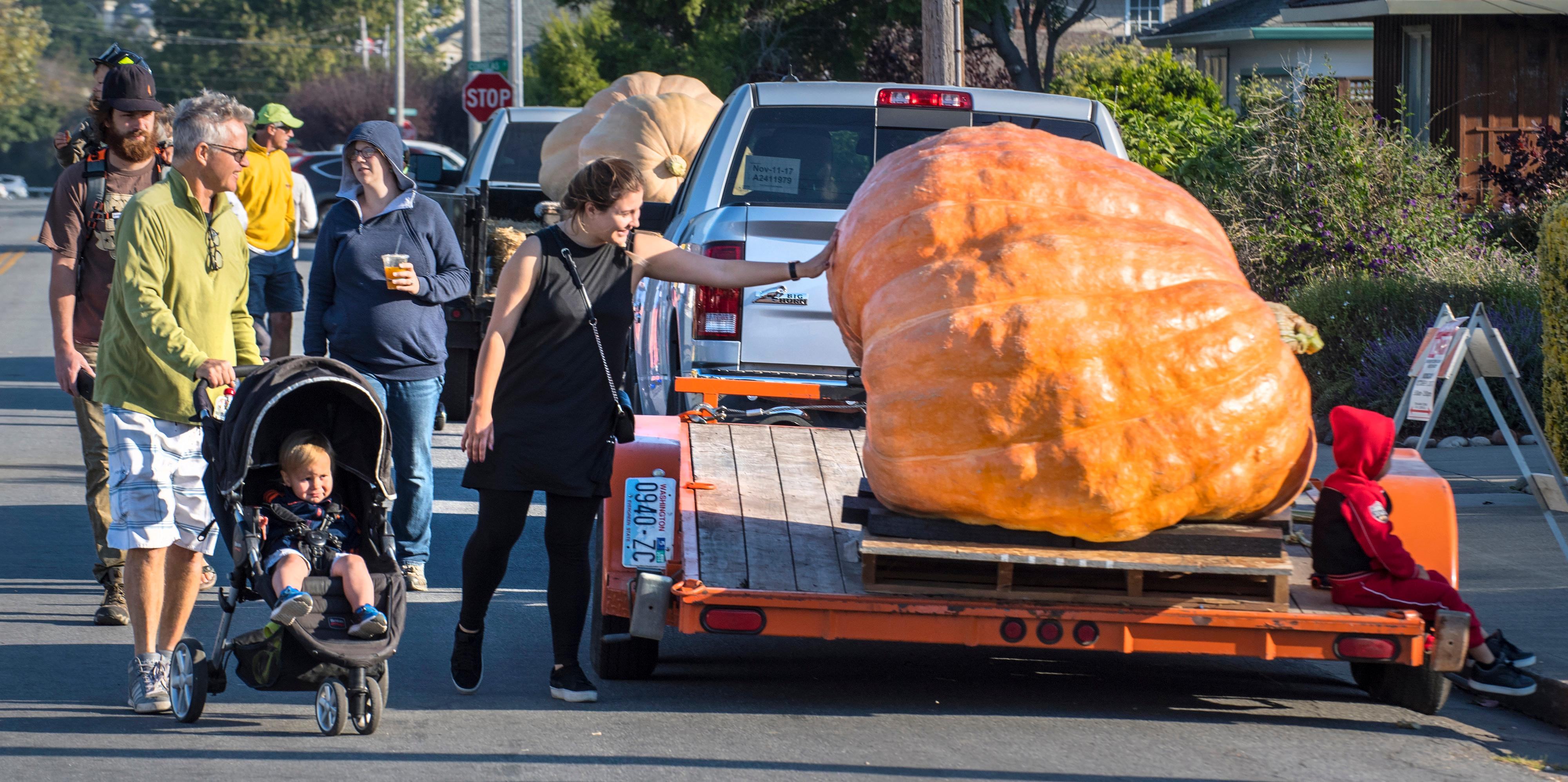 Visitors check out a pumpkin on a trailer at the 44th World Championship Pumpkin Weigh-Off in Half Moon Bay, Calif., on Monday, Oct.  9, 2017. Joel Holland won the competition with a pumpkin weighing in at 2363 pounds.   (Mark Rightmire/The Orange County Register via AP)