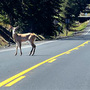 Officials say salvaging roadkill makes a lot of sense