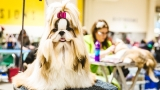 Photos: The Seattle Dog Show is everything you need right now (and more)