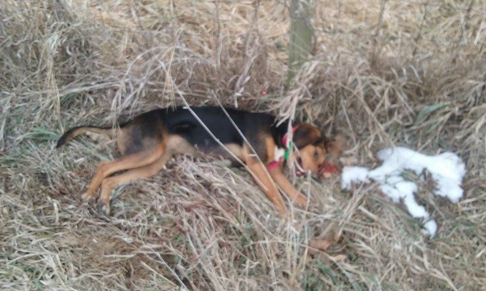 Southeast Iowa man arrested for shooting a hunting dog/Travis Jay via Facebook