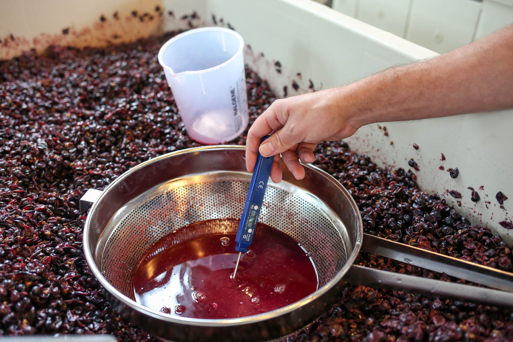 Throughout the fermenting process, the wine needs to be tested for its chemical composition, smell and temperature.{&amp;nbsp;}(Amanda Andrade-Rhoades/DC Refined)<p></p>