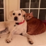 GALLERY | National Love Your Pet Day
