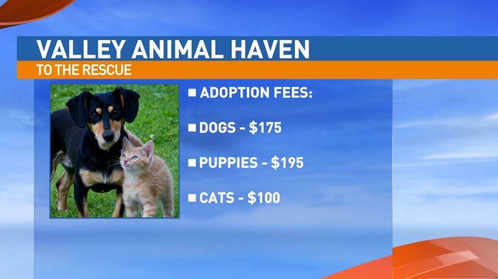 Valley Animal Haven adoption fees