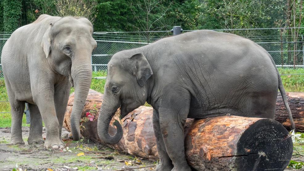 When You Walk Into a Zoo, Are You Helping Animals or Hurting Them?