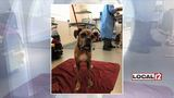 Emaciated dog finds new home