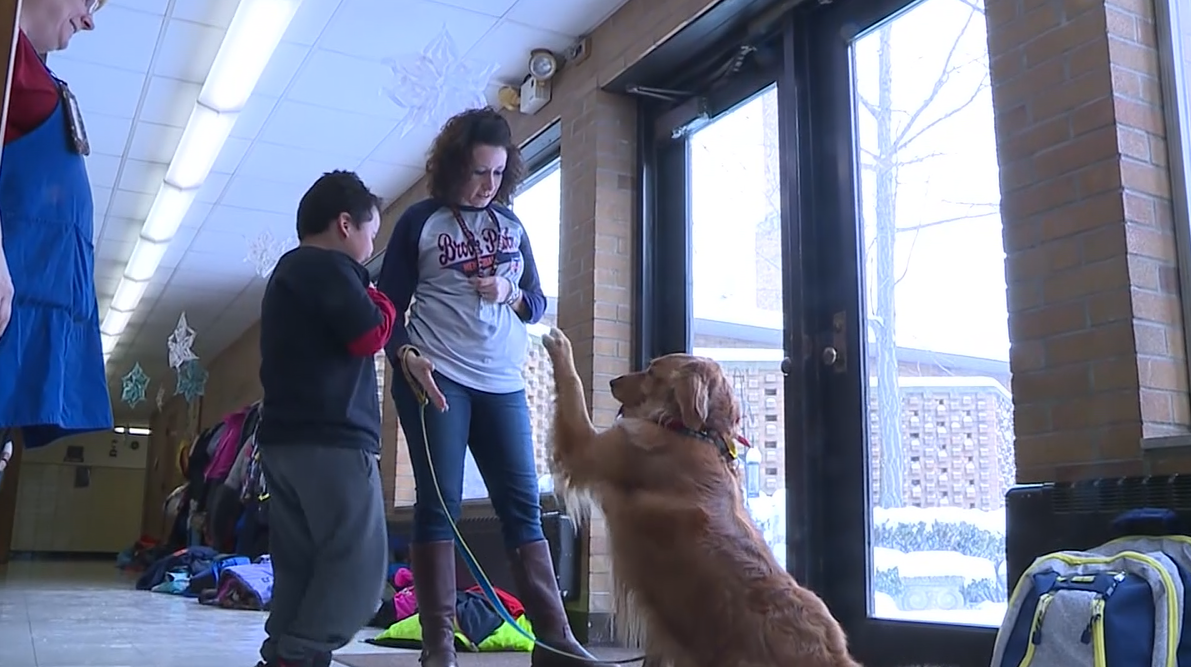 After suffering severe injuries, a golden retriever named Chance is getting a new lease on life as a therapy dog. (WJW/CNN Newsource)