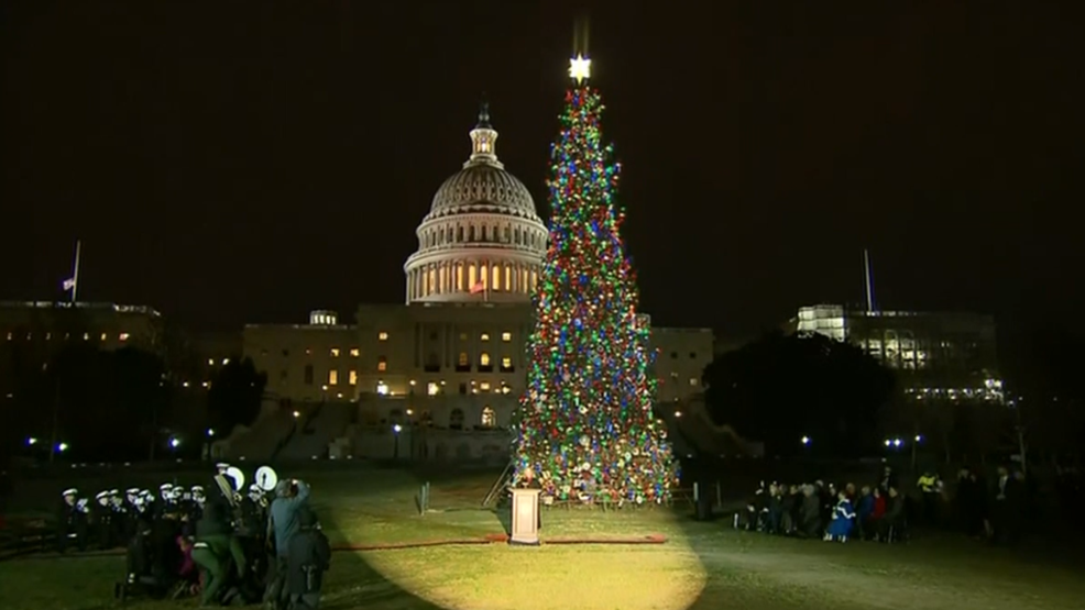 Capitol Christmas Tree.Noble Fir From Oregon Shines As U S Capitol Christmas Tree