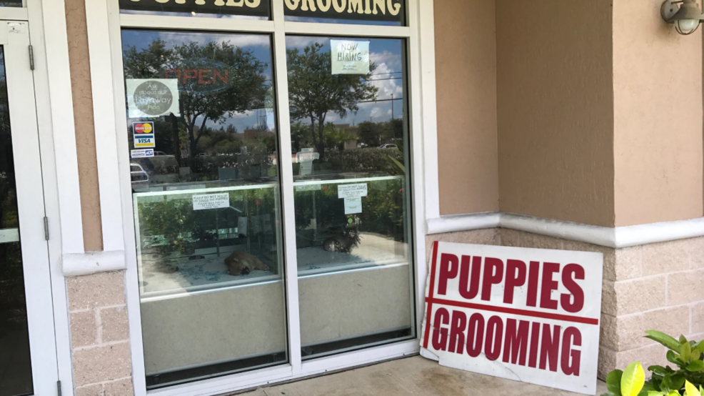 Royal Palm Beach Gives Tentative Ok To Ban Retail Sales Of Dogs And