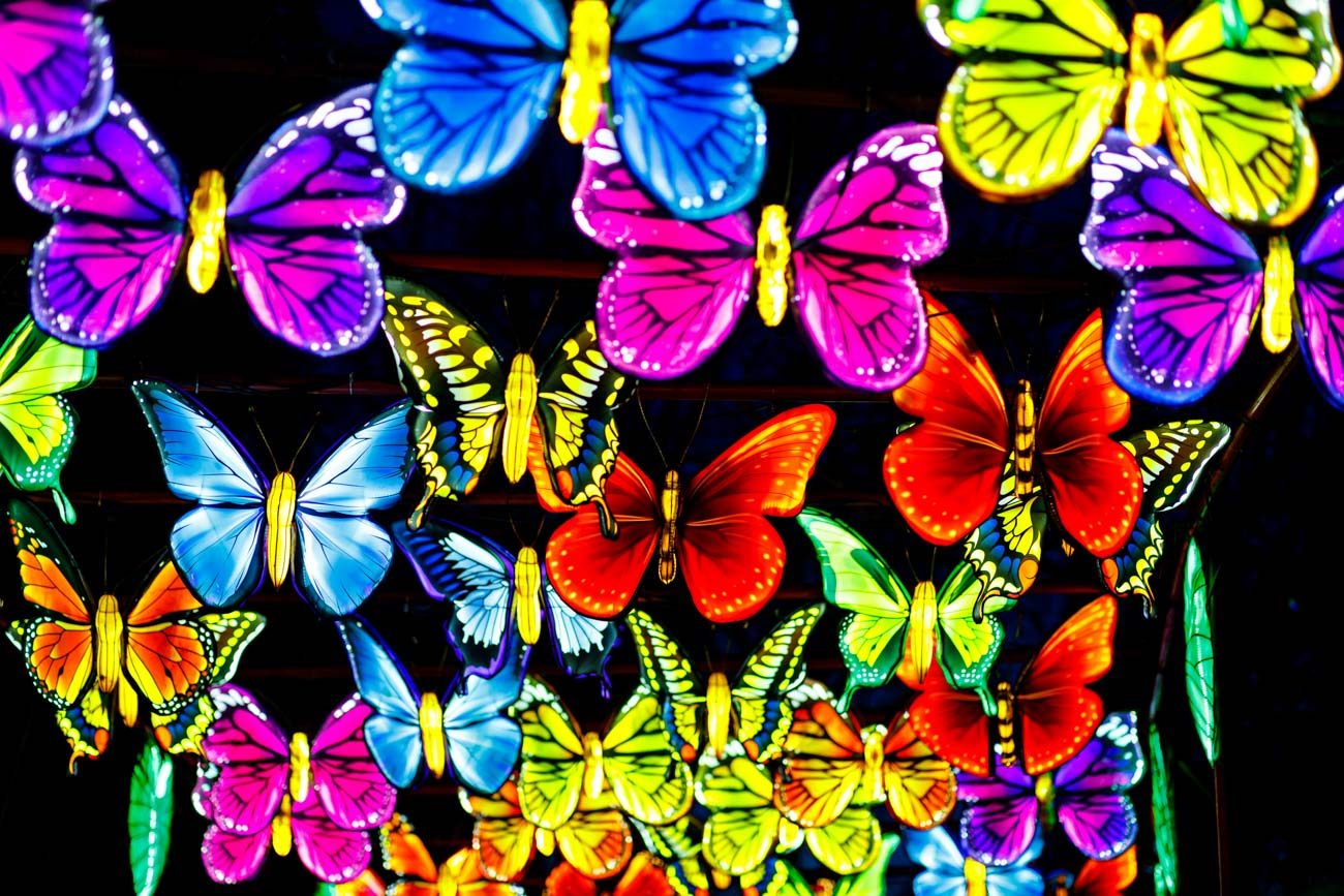 Butterflies are a symbol of free love and good fortune in traditional Chinese literature. The butterfly gallery, located in the Louisville Zoo's island's area, transports onlookers into a kaleidoscope of color and light. / Image: @bobbiphoto via the Louisville Zoo // Published: 8.10.20