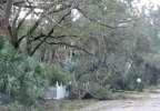 Trees Down 3 - Edisto PD.png