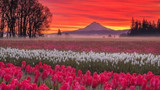 PHOTOS: Celebrating the beautiful Pacific Northwest on Earth Day