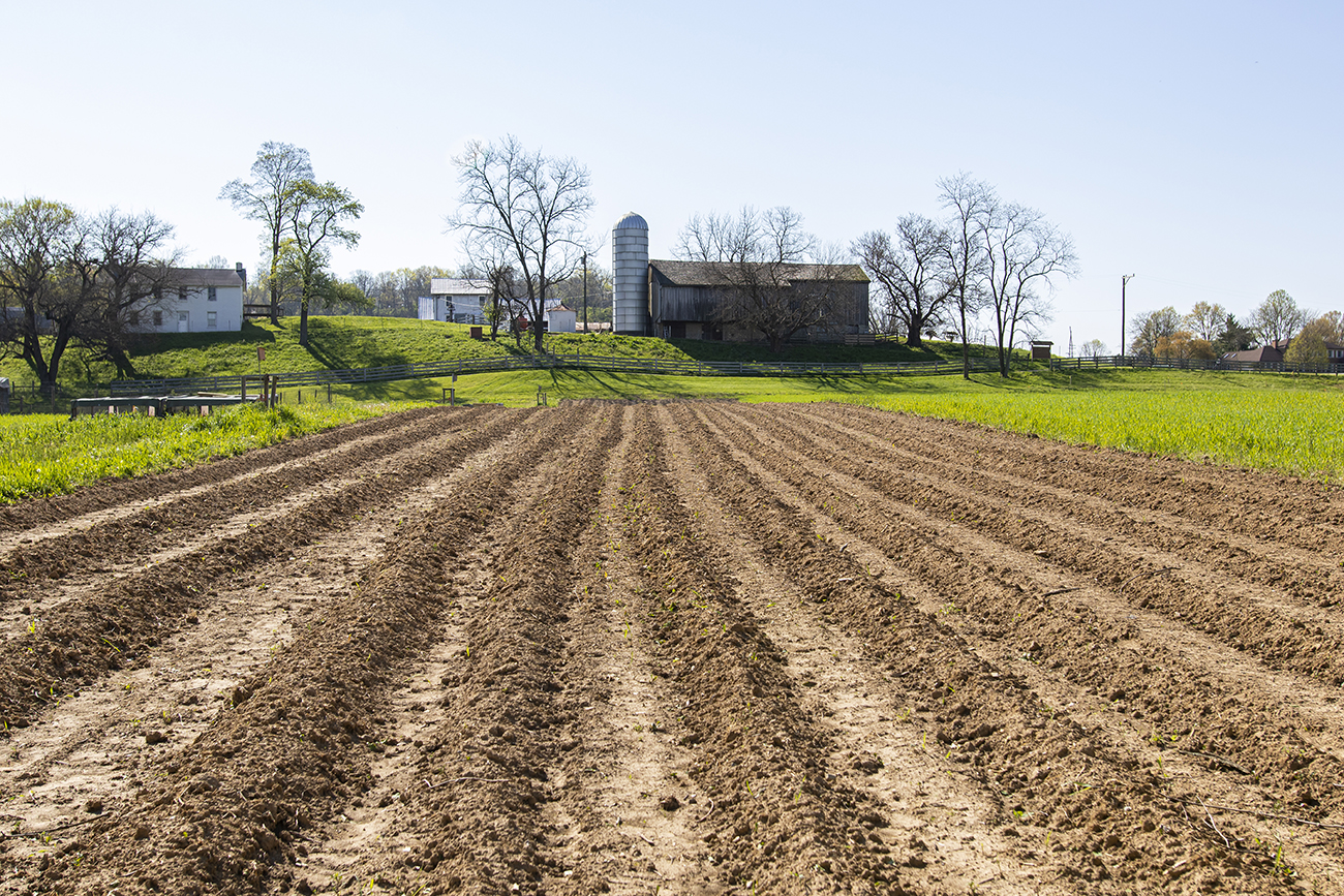 <p>Once the vegetables are ready for planting, the seedlings are sowed in the freshly tilled soil. / Image: Allison McAdams // Published: 5.15.20  </p>
